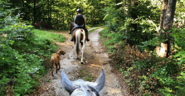 horse riding with dogs