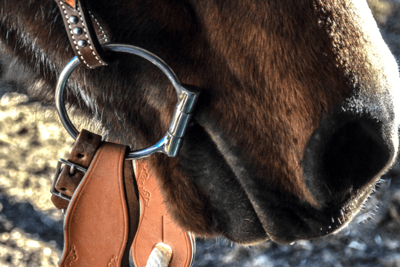 horse bit western