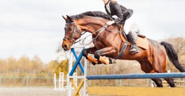 bay horse jumping