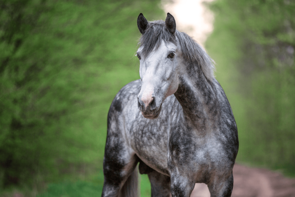 male horse