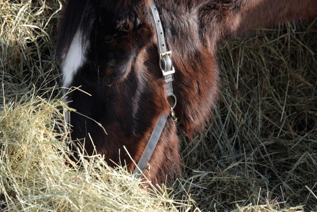 what-horses-eat