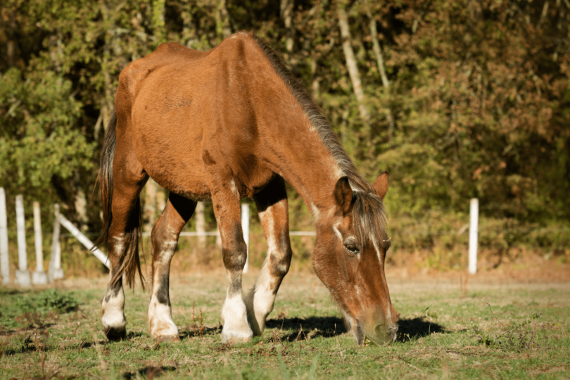 thin horse