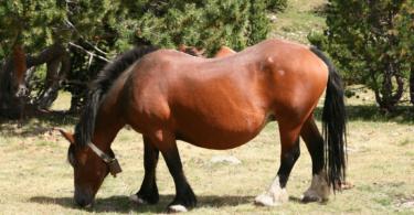overweight horse