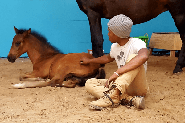 nahshon cook with foal