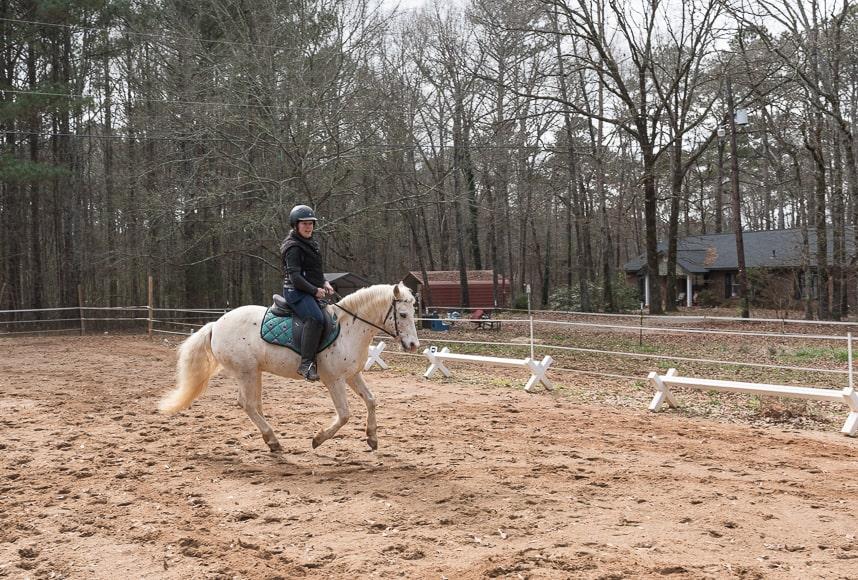 POA horse