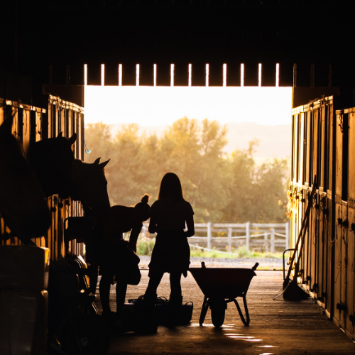 Horse-Care-Management-Featured