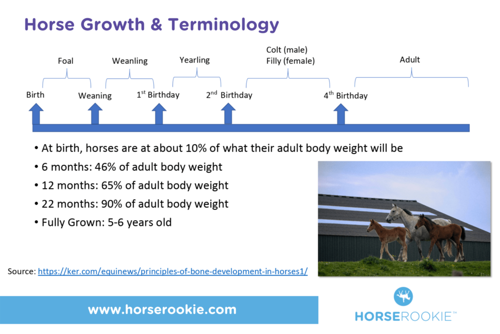 horse growth chart