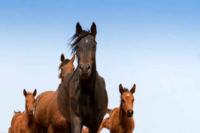 group of horses
