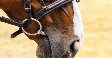 horse bit