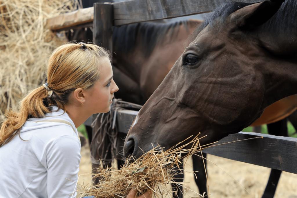 girl feeding horses hay