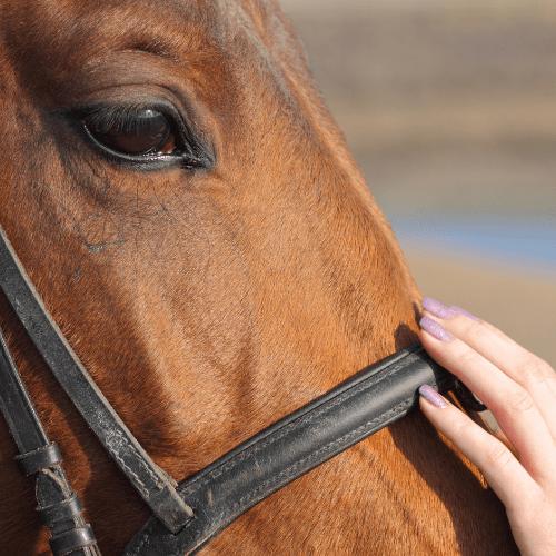 horse partnership