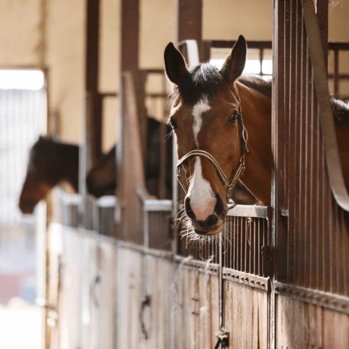 horse records