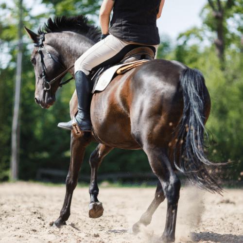 horse riding core