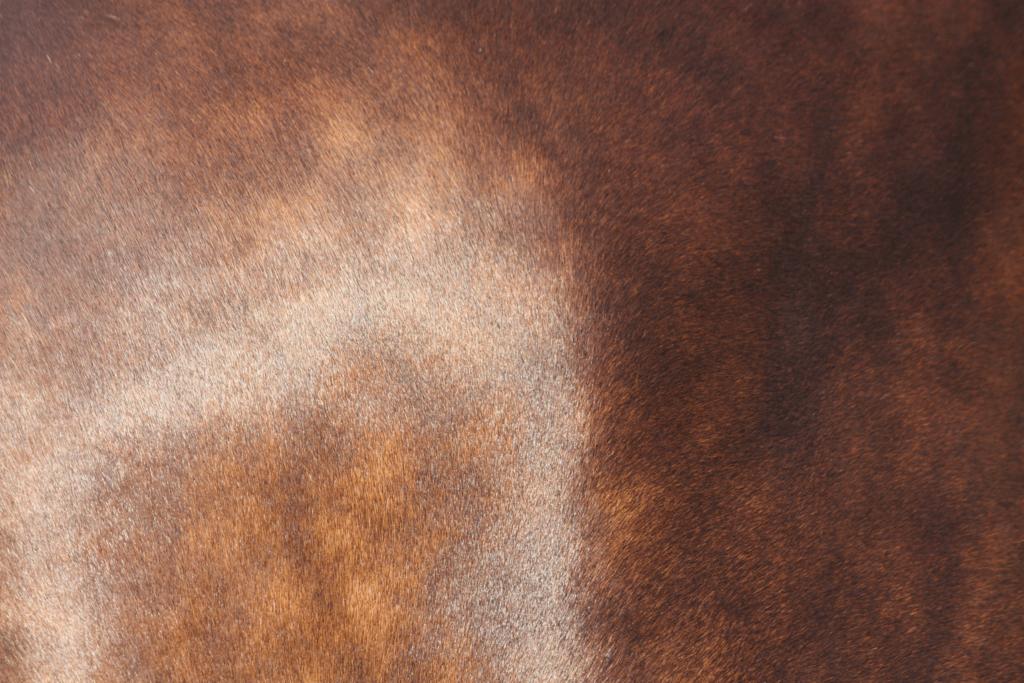 shining horse coat