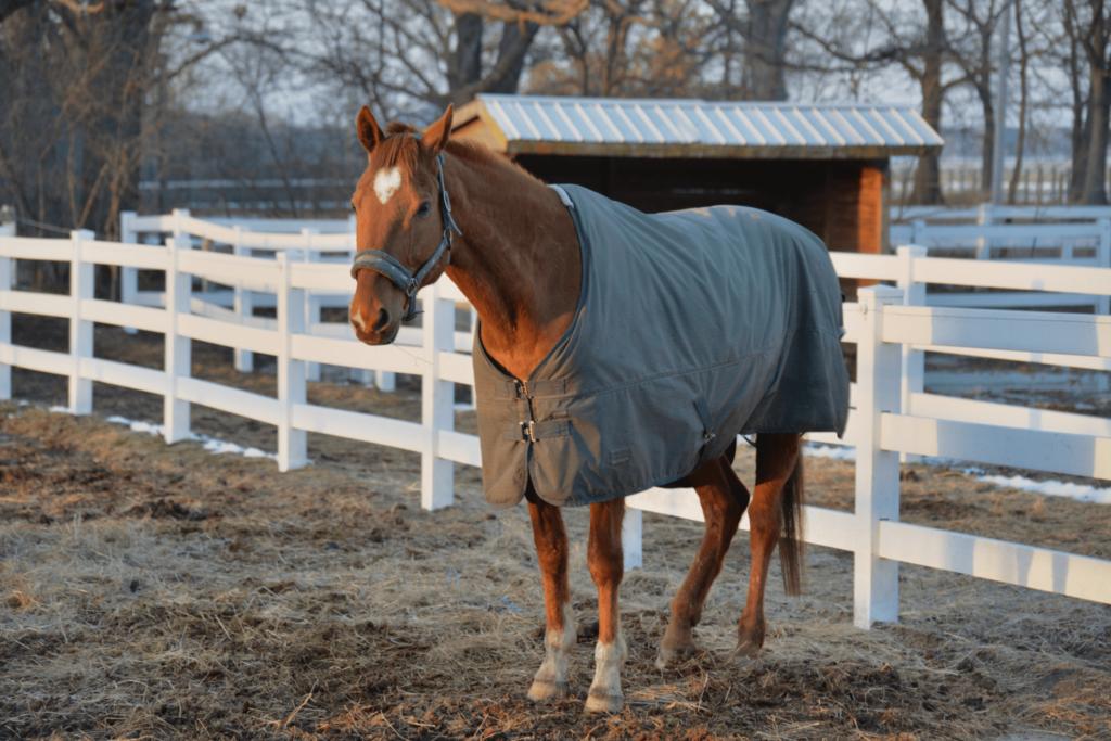 horse in blanket outside