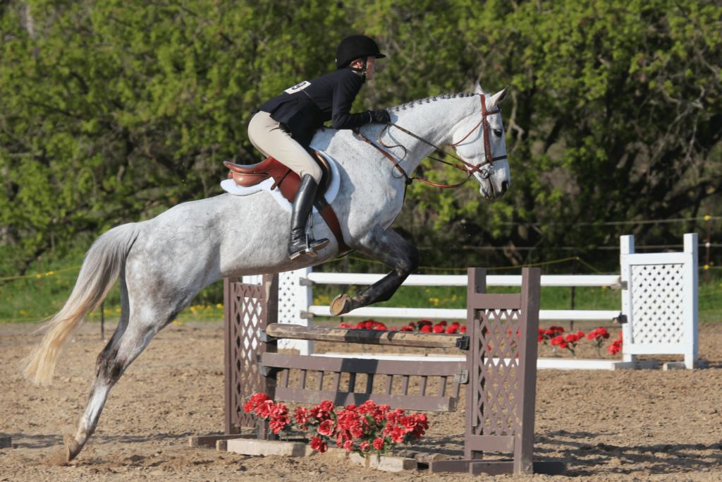 hunter horse jumping