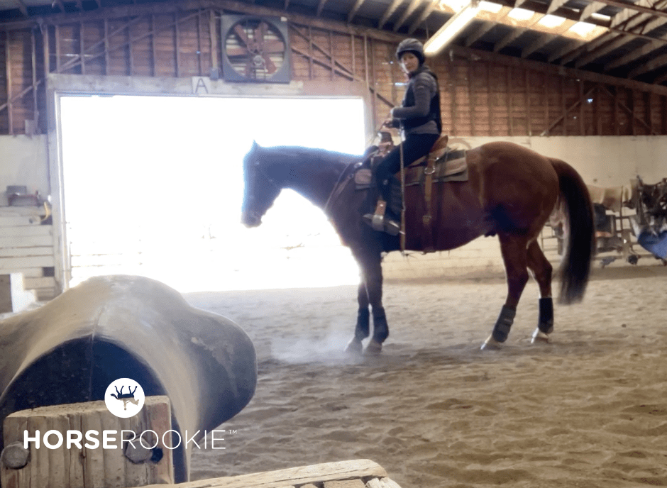 show pivo horse