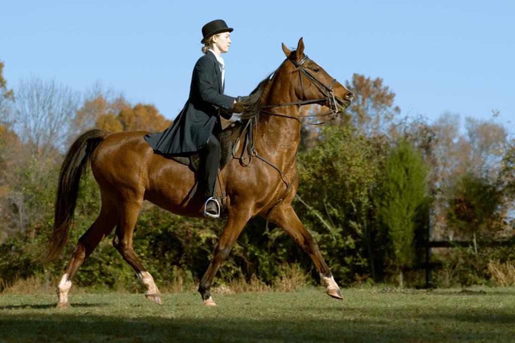 saddleseat horse riding