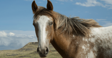 yearling horse