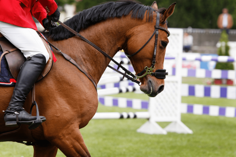 equestrian-olympics-facts
