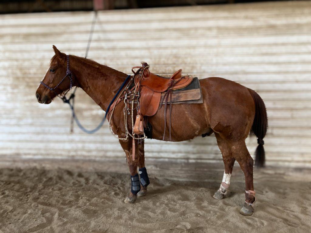 used western saddle