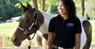 brittany chambers horses