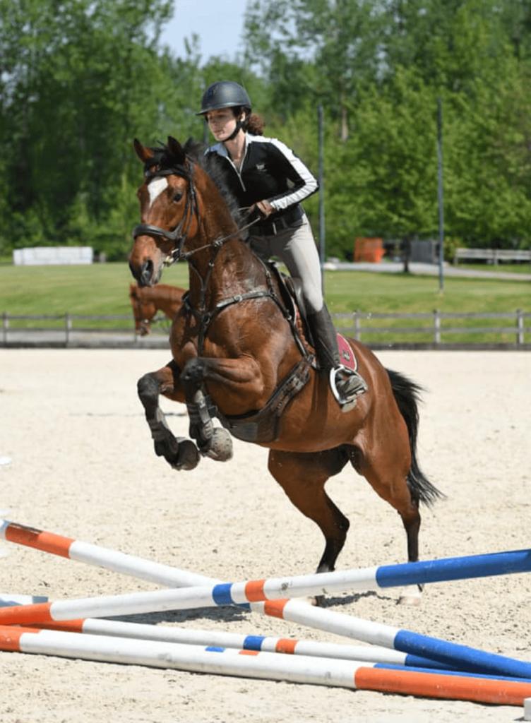 small horse jump