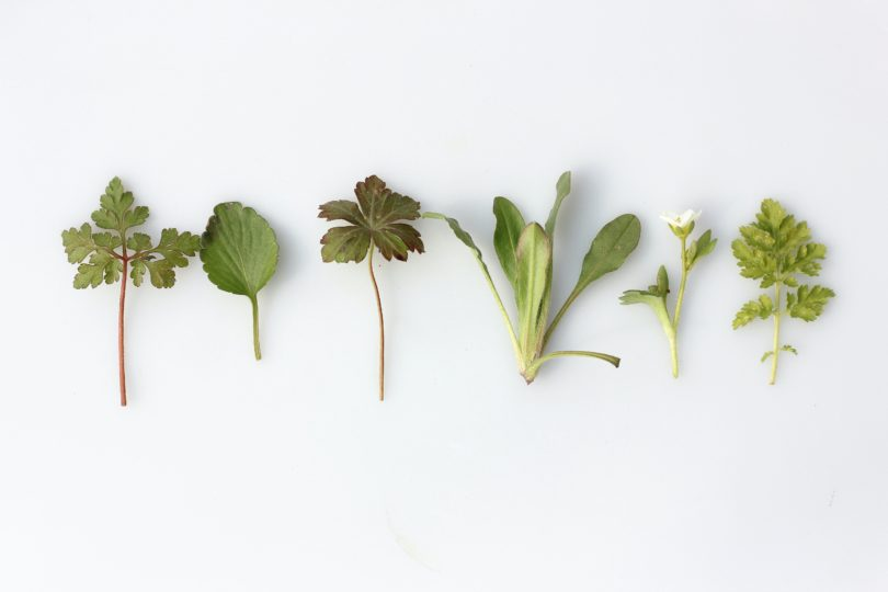 horse herbs and vegetables
