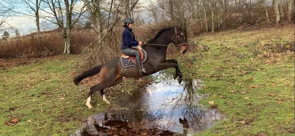 bad horse ride