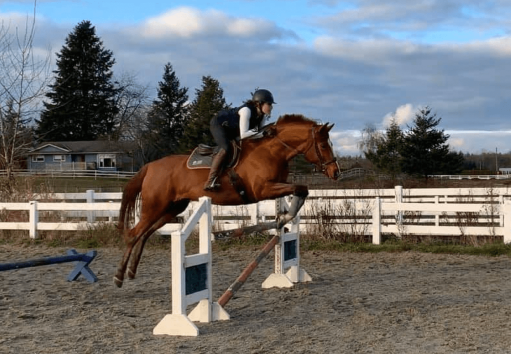 horse gridwork