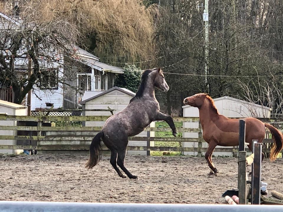 horse behavior