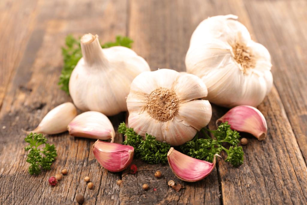 garlic for horses