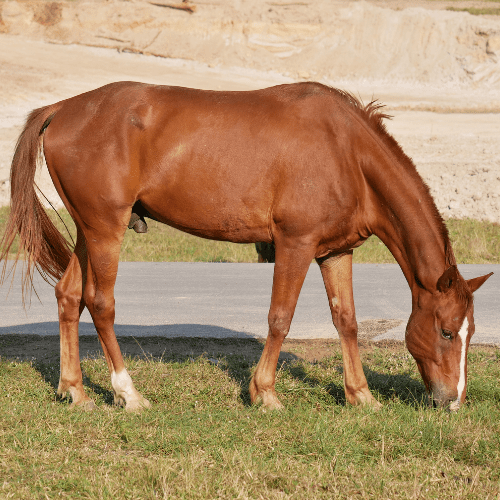 horse-grass-training-min