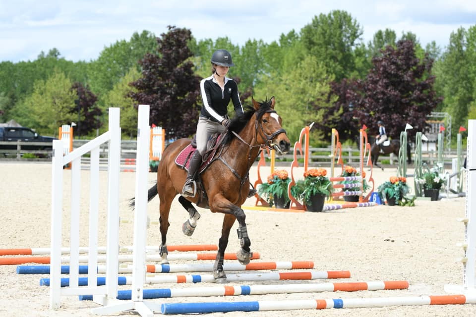 horse ground poles