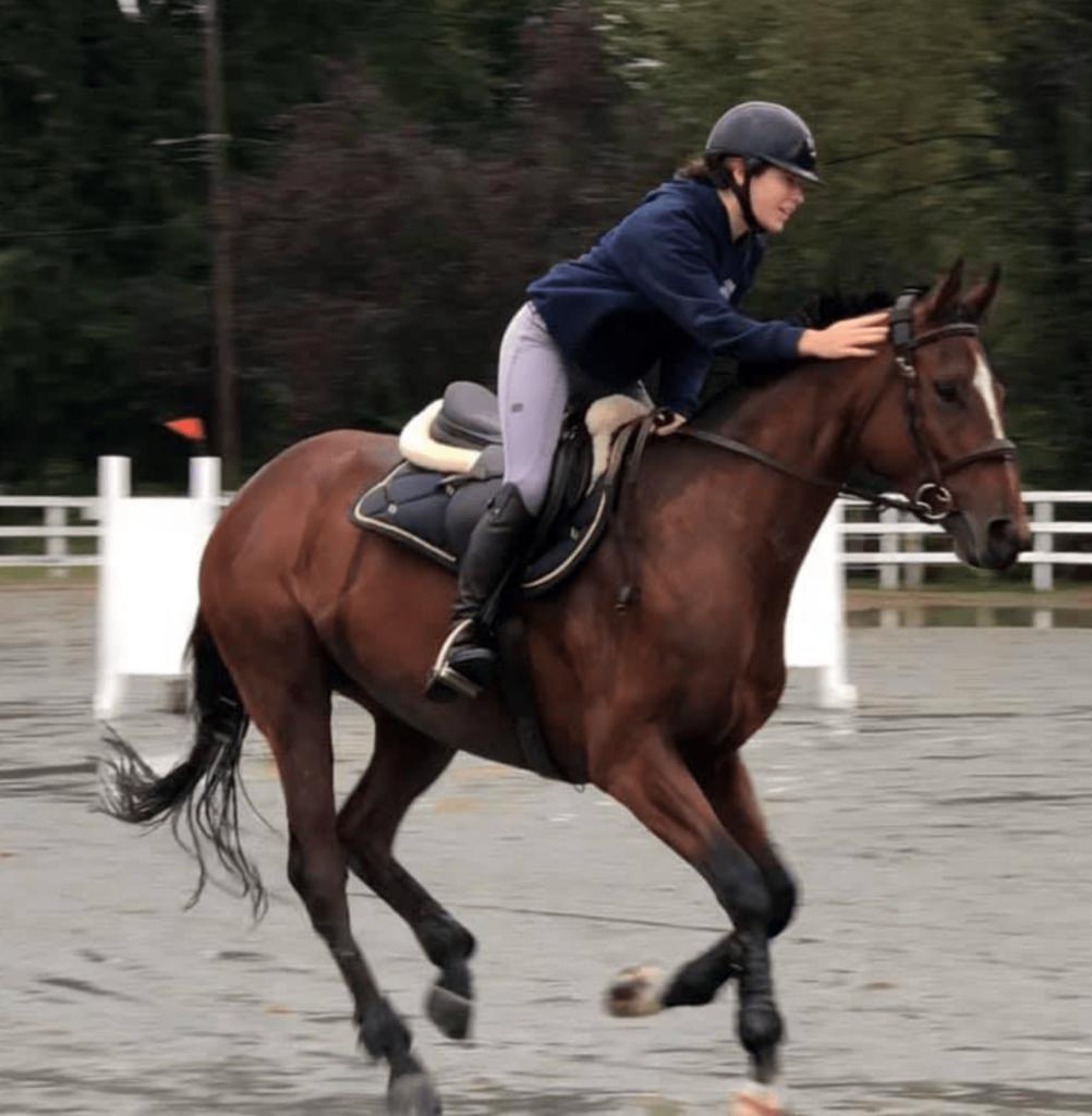 horse jump confidence