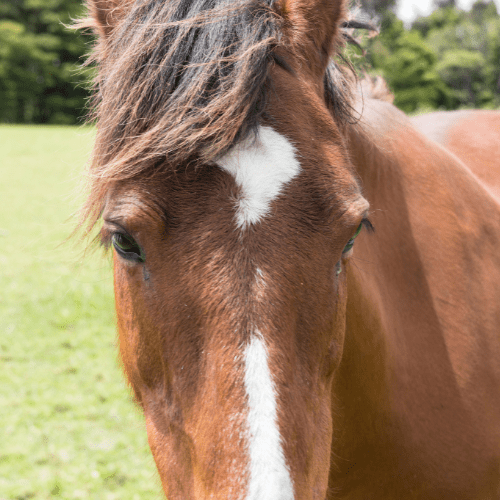 horse language
