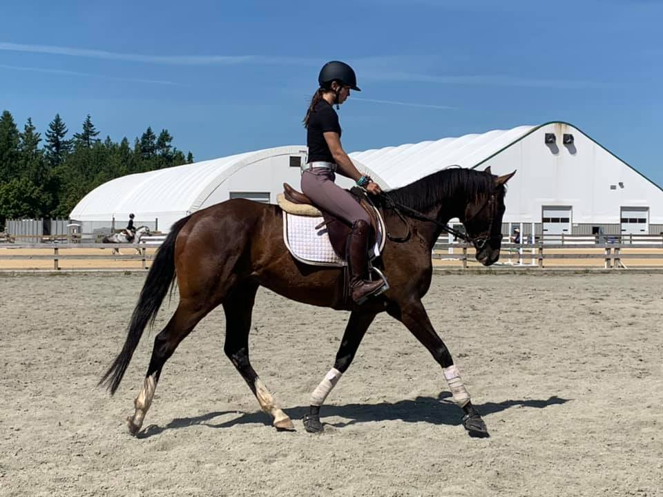 horse riding clinic