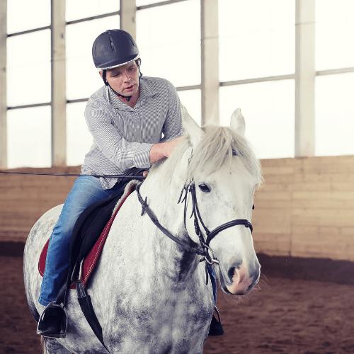 trainable horse