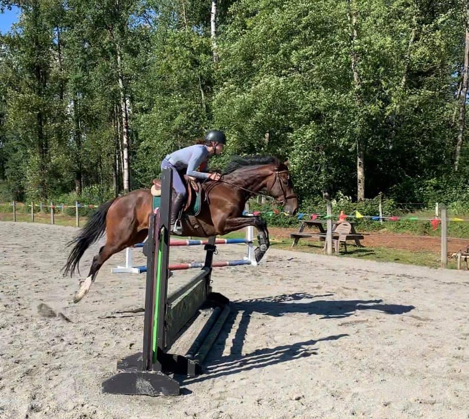 practice horse jump