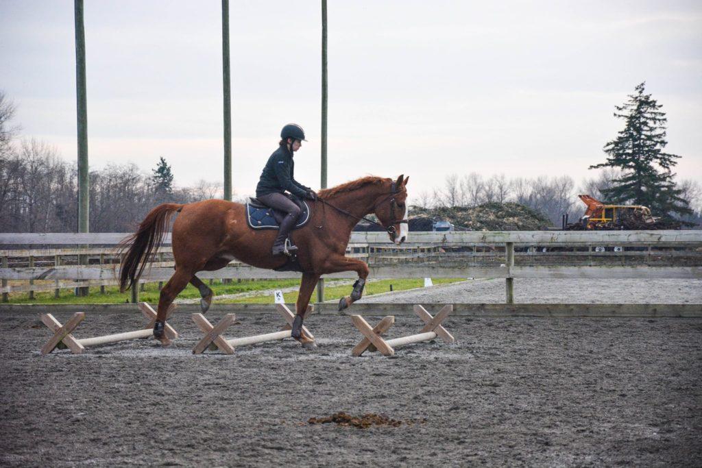 horse rider ground poles