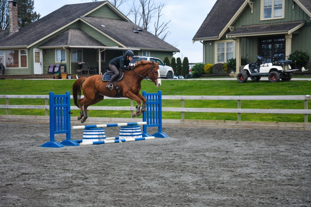 show jumping vertical