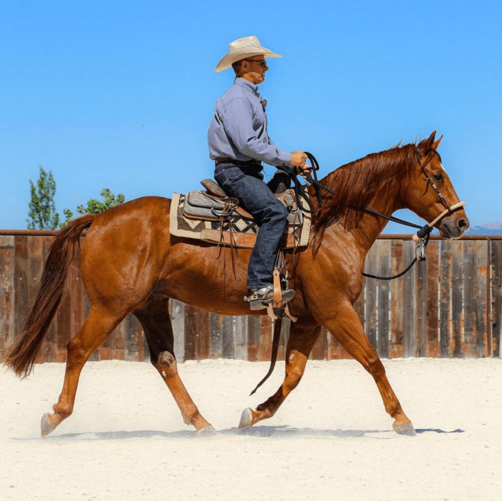 warwick schiller half halt horse
