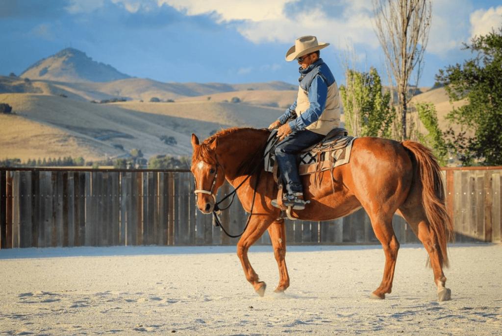 warwick schiller horse training
