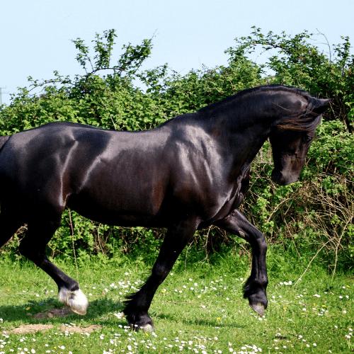 horse liberty