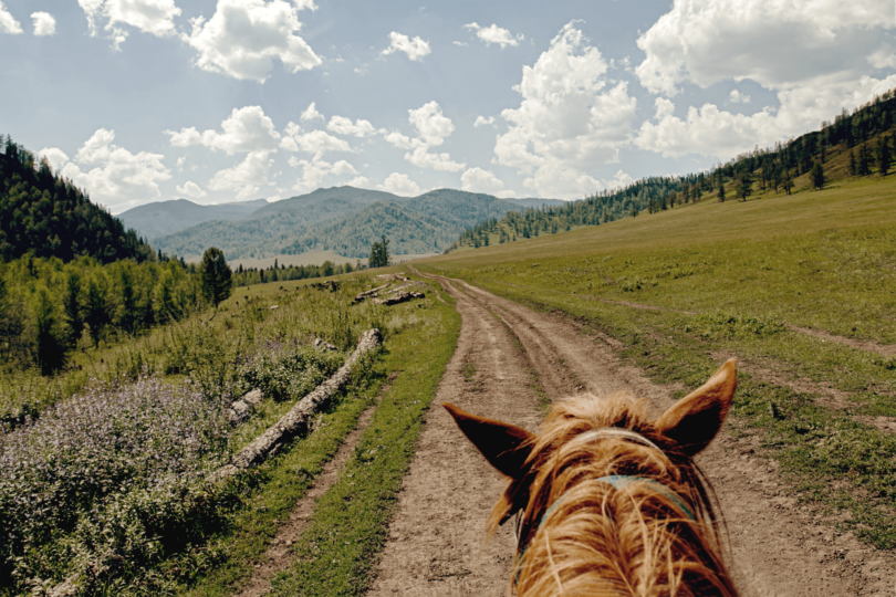 best horse breeds for trail riding