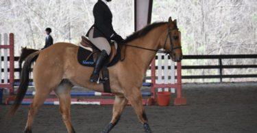 milan berry riding horse