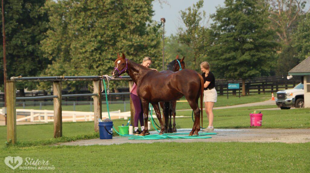 horse bath pony club