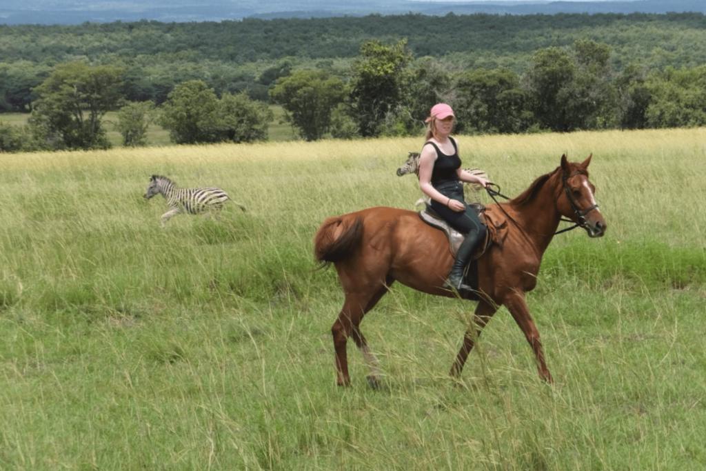 trail horse zebra