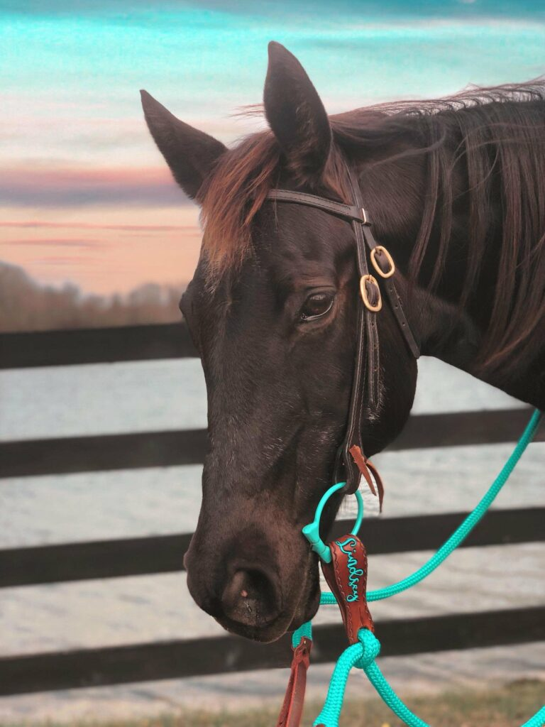 custom reins and slobber straps
