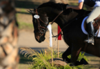 how much jumping horses cost